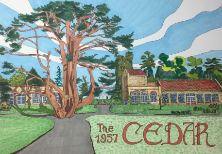 Ols Cedar in Cedars Park